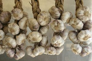 512px-Allium_sativum_-_Garlic_-_01