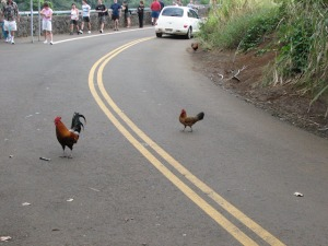 "I'm going to try ""Why did the chicken cross the road?"" on them next."